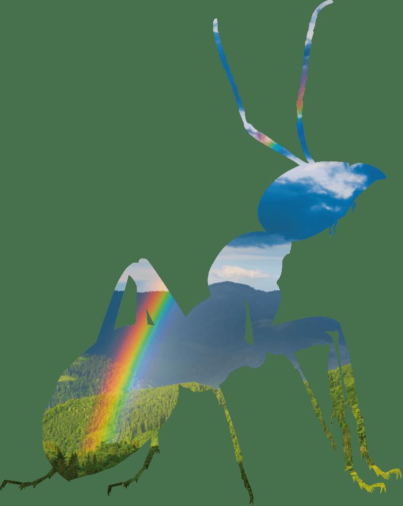 fourmi festival 2020