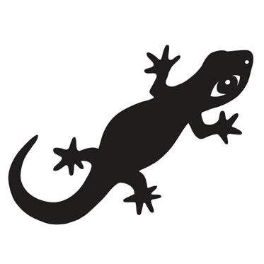 ombre salamandre